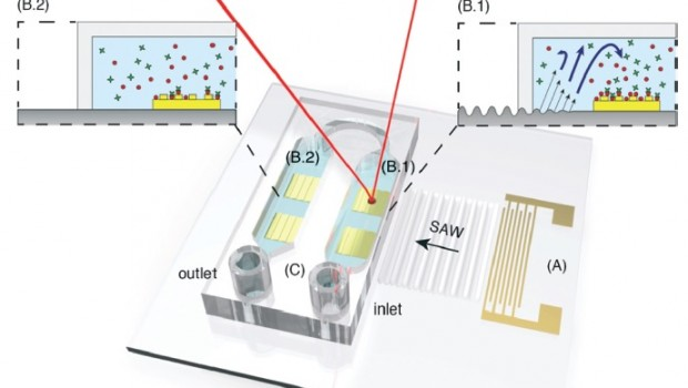 A surface acoustic wave (SAW)-enhanced, surface plasmon resonance (SPR) microfluidic biosensor in which SAW-induced mixing […]